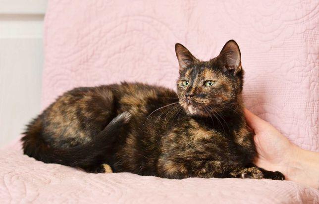 Неймовірної краси кішка Ксюша. 1 рік. Стерилізована. Кіт. Коти. Киця.