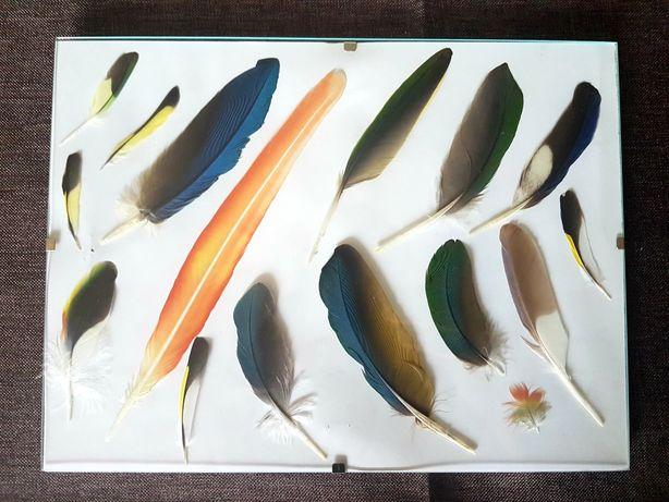 Obrazek obraz z piór ptaków, papug
