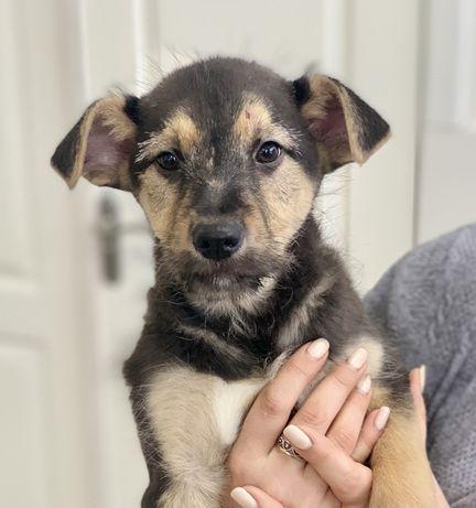 Мальчик щенок 2,5 месяца