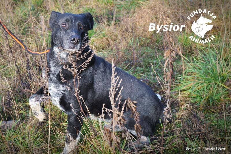 Bysior introwertyczny indywidualista Gdańsk - image 1