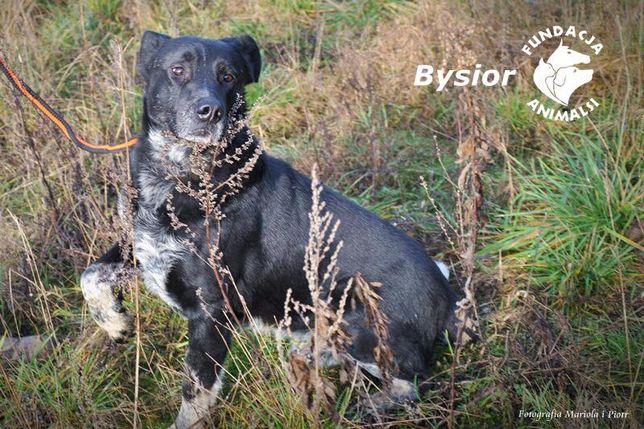 BYSIOR - czeka na swój dom.