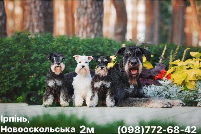 Груминг/стрижка/триминг собак