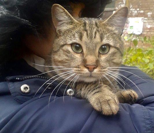 Нежнейший молодой котик Масянчик ищет семью