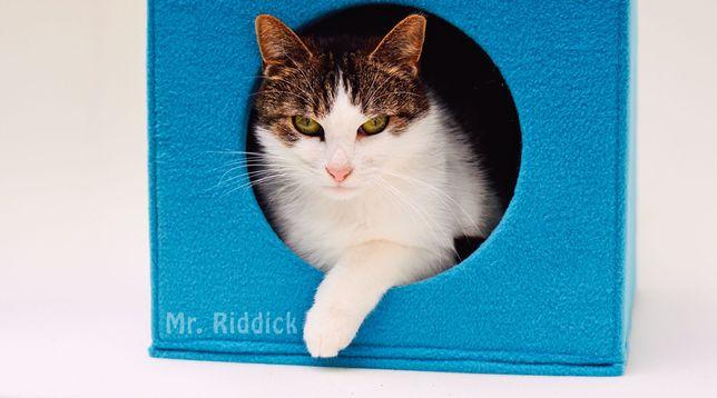 Domek, budka, legowisko dla kota - kolor turkus różne kolory