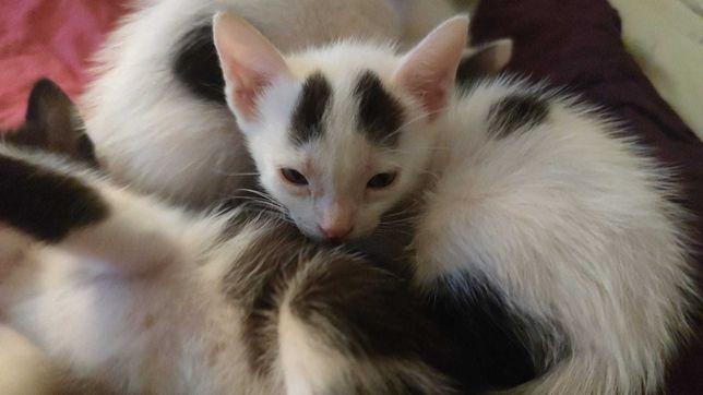 Dou gatinhos meiguinhos