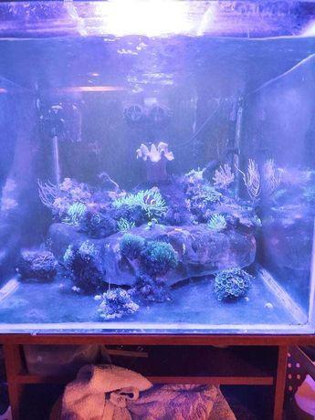 Sprzedam akwarium morskie 200l