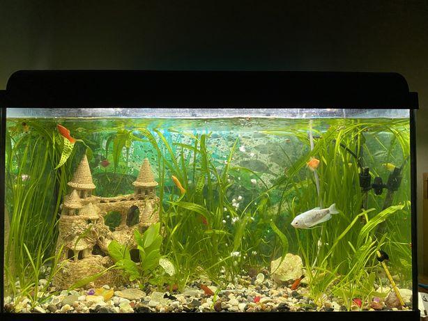 Акваріум з рибками та обладнанням