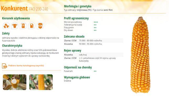kukurydza KONKURENT Fao230-240 , RYWAL Fao 210 -cena 167zł