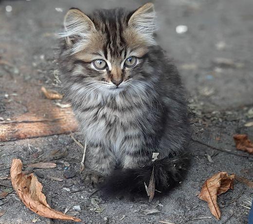 Котик, котята,коты, кошка, ДАРОМ