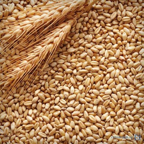 Продам пшеницу урожай 2020 г
