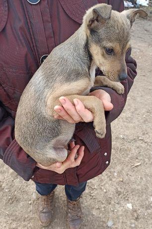 Отдаем щенков в добрые руки