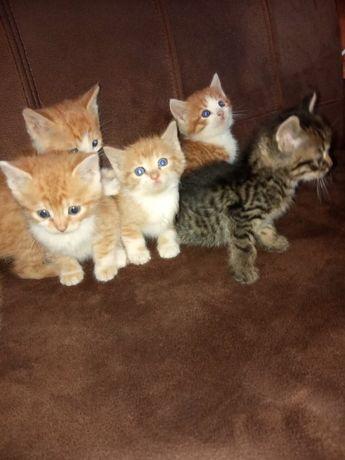 Доставим по Кривому Рогу бесплатно!Котята в хорошие руки!