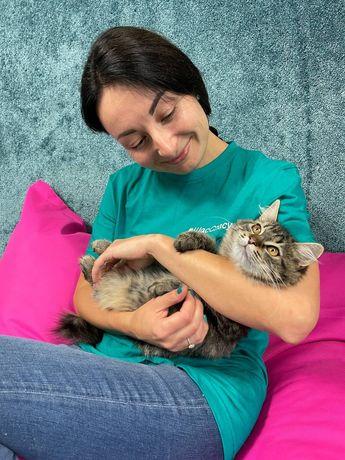 Мурчунья Мэйлин - чудо-котенок бесплатно