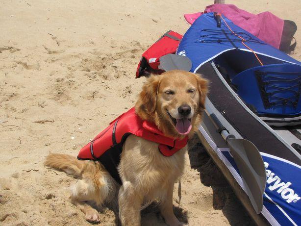 Colete Salva Vidas Cachorro