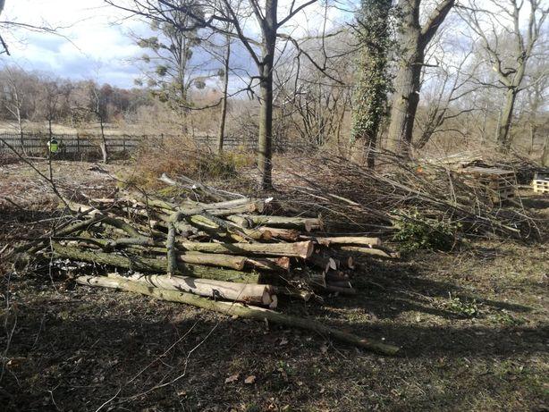 Wycinka drzew za drewno.Dzialki rol. bud.itp.Kepno,Ostrzeszow+70km