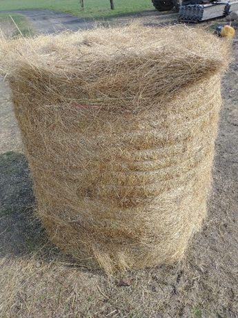 Słoma z trawy nasiennej w balotach 120x120