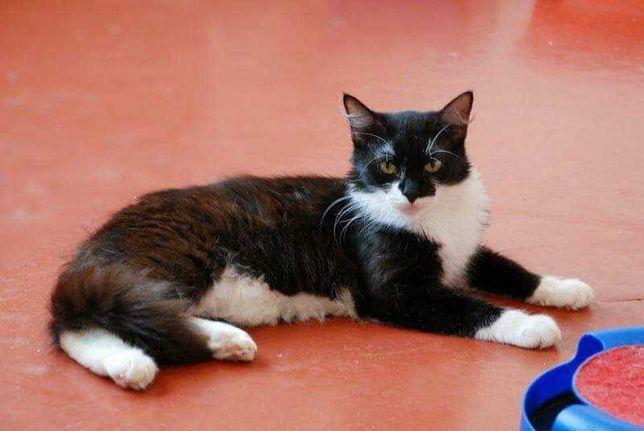 Чудесная кошечка Коша в поисках любящей семьи!