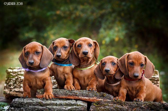 Фотосъемка собак/щенков