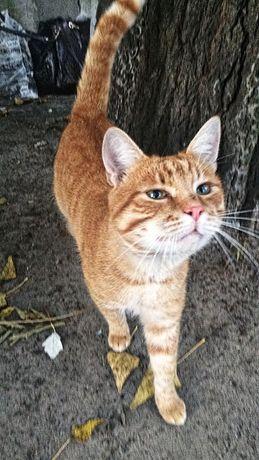 Рыжий кот ищет дом, солнечный котик живет в месте с угрозой для жизни