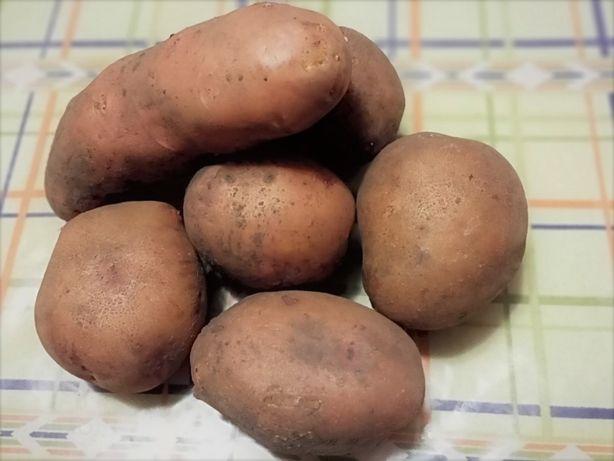 Картошка домашняя