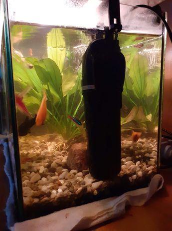 Akwarium dla rybek