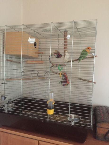 Mam na sprzedasz papuge