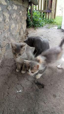 Котенята в добрі руки.