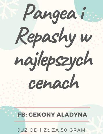 Pangea, Repashy - karma dla gekon orzęsiony, najlepsza cena w Polsce