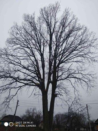 Зрізання кронування дерев, арбористика