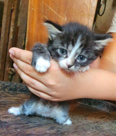 Отдаю котиков в хорошие руки