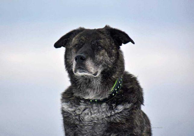 Vincent starszy pies potrzebuje kochającego domu.