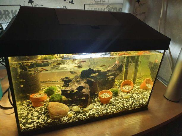 Akwarium 25 litrów