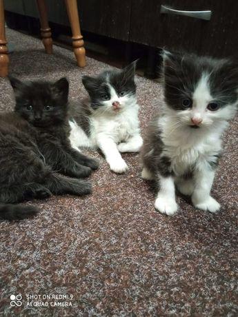 Котятки ищут дом.