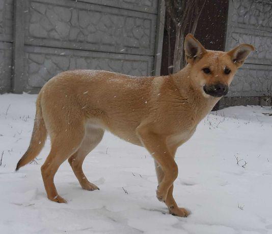 Собачка щенок подрощенный