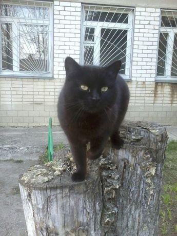отдам черную кошку,1 год, стерилизация бесплатно