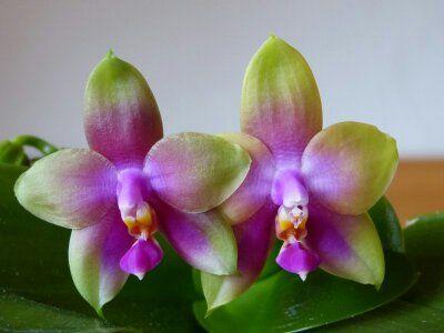Орхидеи отцвели