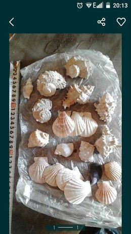 Ракушки для аквариума