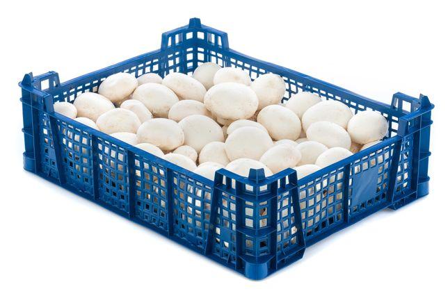 Sprzedaż HURTOWA pieczarek - pieczarka biała 3kg