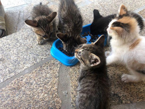 Ofereco gatinhos gatos gatas gato gata
