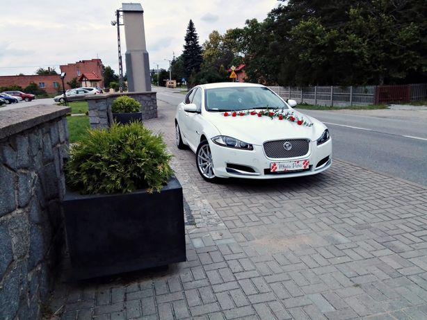Biała limuzyna do Ślubu, auto Jaguar XF250 do wynajęcia