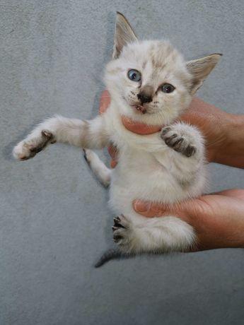 Dão-se 2 gatos para adoção com cerca de 2 meses