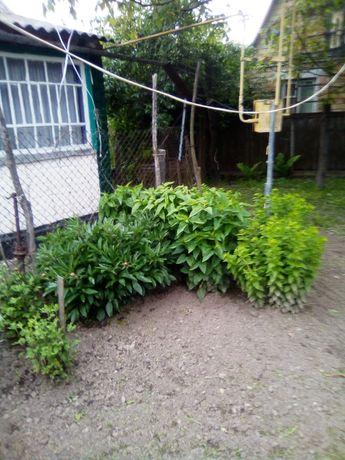 Продам дом и участок 45 соток в селе Копылов От Киева 40 км