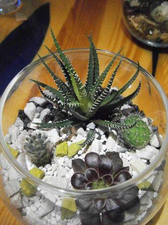 Флорариум,сокуленты,кактусы,композиция,мини сад,Кривой Рог