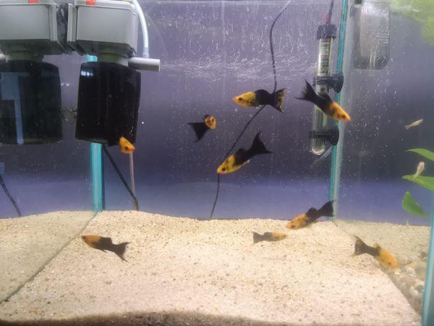 Sprzedam rybki sklep zoologiczny