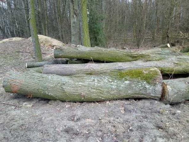 kłody drzewo lipy