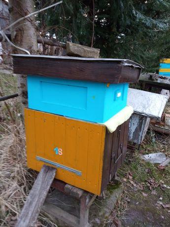 Sprzedam pszczoły, ule langstroth, rodziny pszczele
