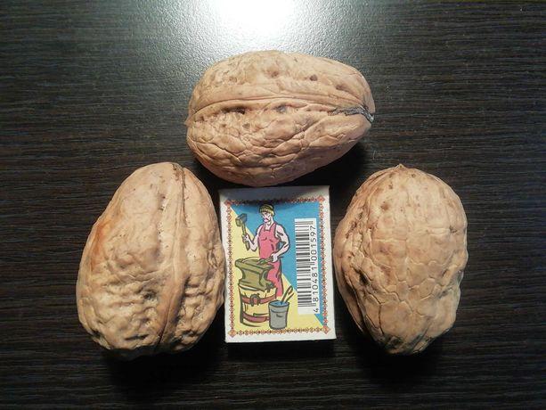 Грецкий орех на посадку