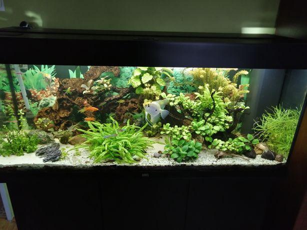 Zamienię roślinki na rybki