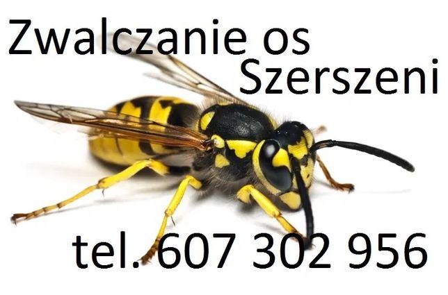 Zwalczanie gniazda os szerszeni osy szerszenie Wrocław Oława Oleśnica