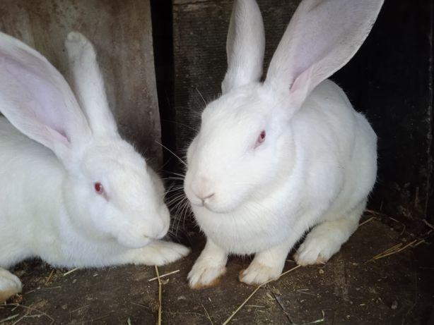 Продам кролі !!!